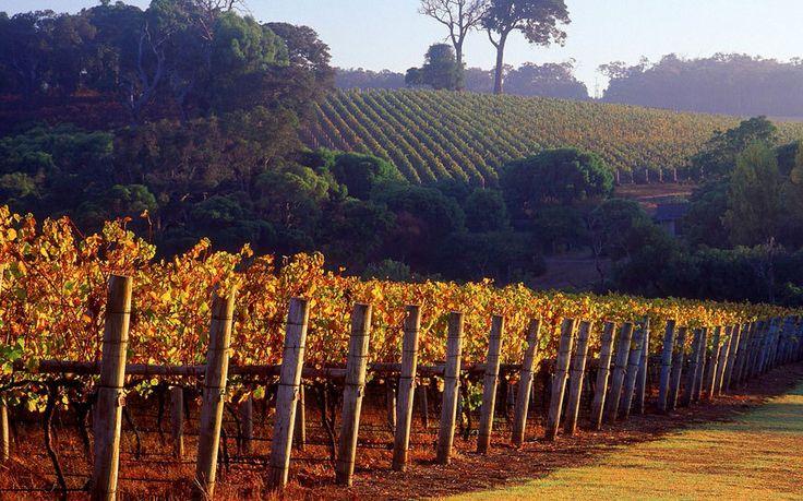 Winery, Margaret River, Western Australia