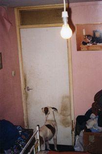 richard billingham - pink walls, window above door, kitten picture, hanging bulb