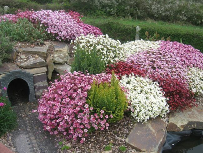 pflanzen für steingarten bodendecker buesche blueten rosa rot weiss