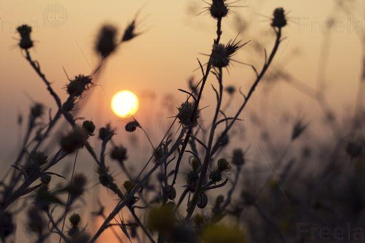 Autumn sun.  #sun #autumn #autumnflowers #nature #freelancecreative #freelancediscount #freelancer