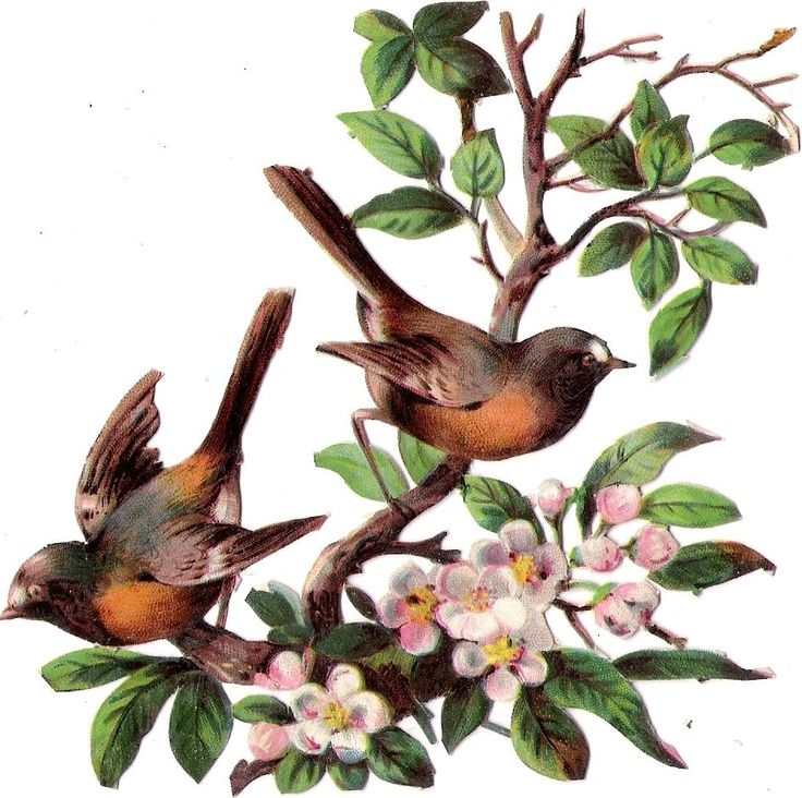 Oblaten Glanzbild scrap die cut  chromo Vogel bird Ast branch Blüte blossom