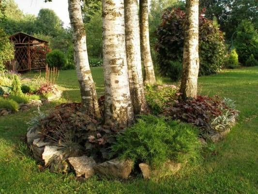 flower bed under the birch