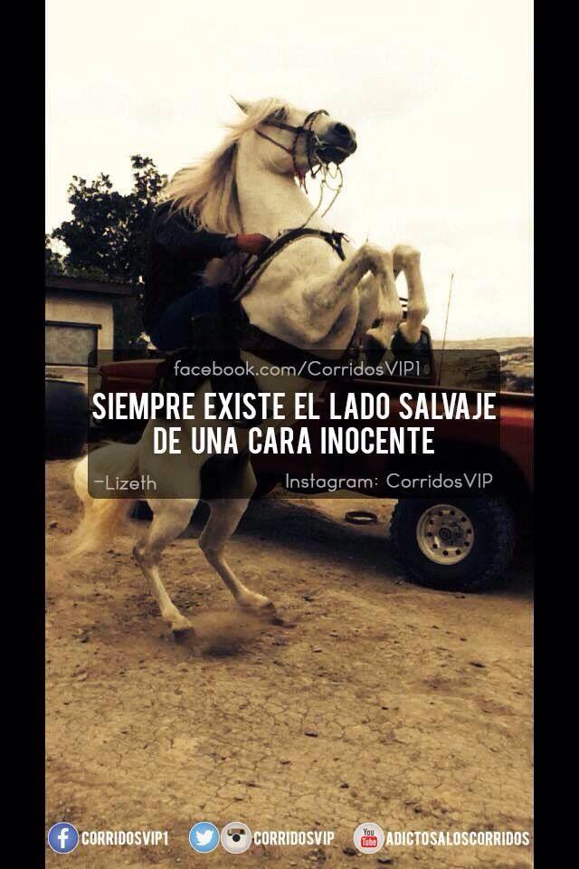VIP equitación