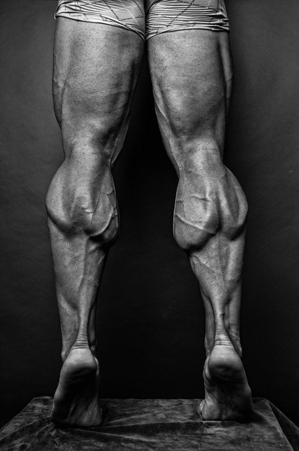 87 best leg images on pinterest | human anatomy, anatomy reference, Muscles