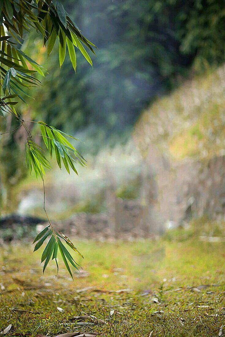 Legal Photoshop How To Photographs Photoshopcreative Photoshopforbeginnerswebsite Blurred Background Photography Blur Photo Background Dslr Background Images