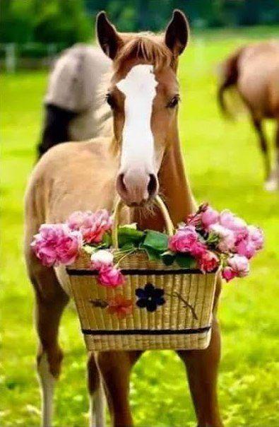 Картинки с лошадками на день рождения, пуха пера