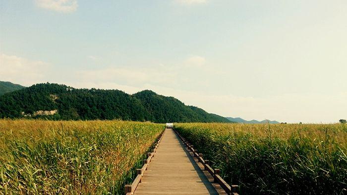 혼자하는 여행, 순천만 생태공원!