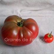 Graines de TOMATES ANCIENNES - GRAINES de FOLIE .com