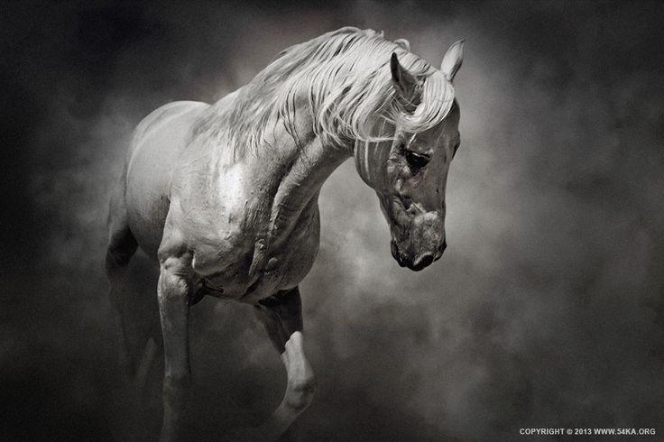 Black and White Horse | White horse photography, Beautiful ...