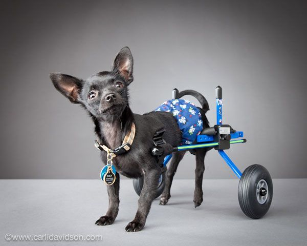 Photographer Carli Davidson Captures Pets' Personalities | Dogster