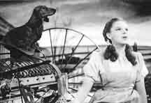 The dog in The Wizard of Oz was originally supposed to be played by a Dachshund named Otto, however, the studio thought there was still too much pre-war tension and replaced Otto with a Norwich terrier. This is one of the original still shots from the movie.