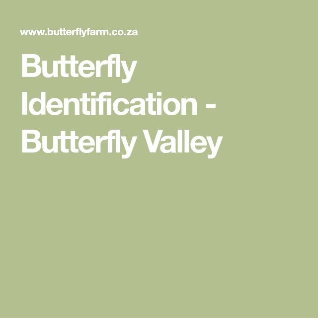 Butterfly Identification - Butterfly Valley