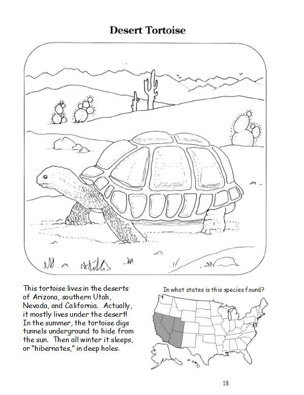 20 Best Books Of The Bible Coloring Pages Images On