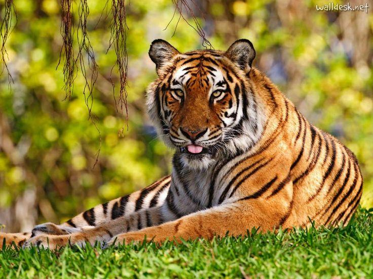 Meditação do Dia: Animais selvagens!