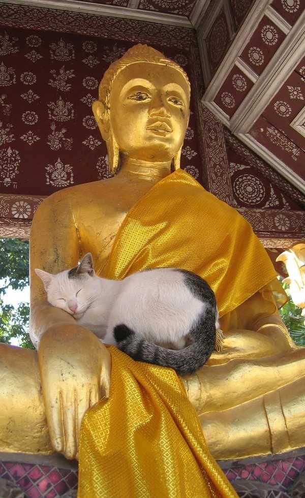 新ジャンル「仏と猫」、尊い可愛い癒される!