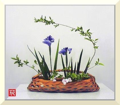 生け花「花菖蒲