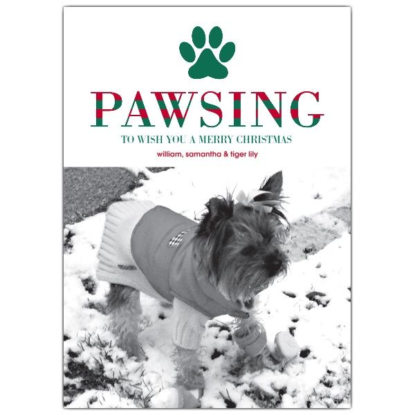 44 best christmas card ideas images on pinterest christmas ideas pawsing and wishing pet holiday photo cards m4hsunfo