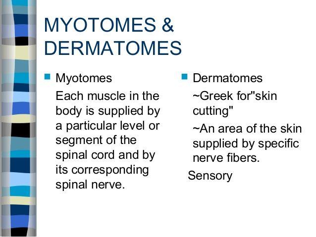 dermatomes of upper limb pdf