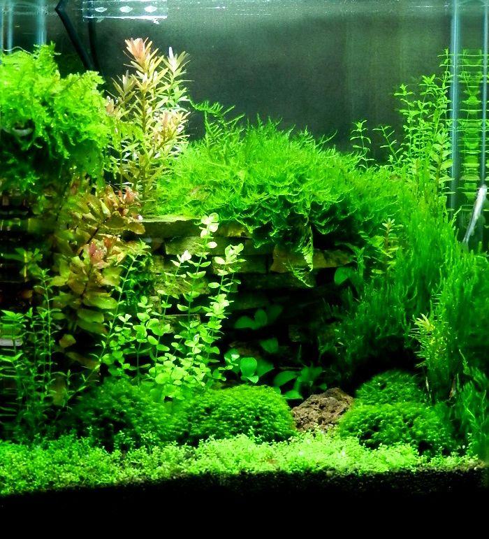 aquarium aquascape design ideas 131 best nanocube images on pinterest aquarium ideas