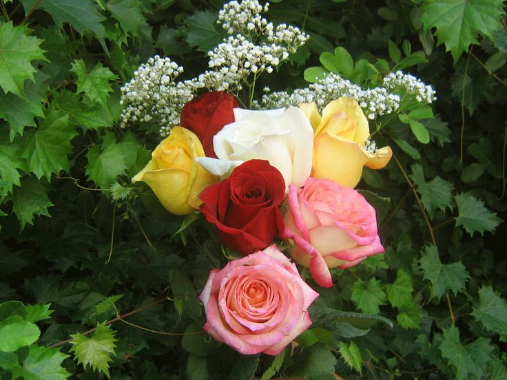 17 best ideas about rose wallpaper on pinterest - Rose screensaver ...