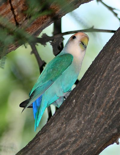 It's not that uncommon to see escaped exotic birds at bird feeders and in yards here in Tucson and southern Arizona.