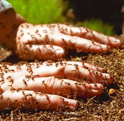 Natural Ant Killer 1. Borax Bait 2. Sugar Bait 3. Cinnamon Sticks and Garlic Cloves 4. Black Pepper 5. Mint 6. Corn Starch Honey