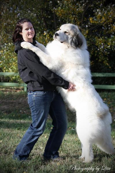 Tammy euzkadi pyrenean mountain dog great pyrenees breeder and