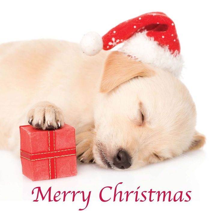 1000+ Images About Yellow Labrador Greeting Cards On