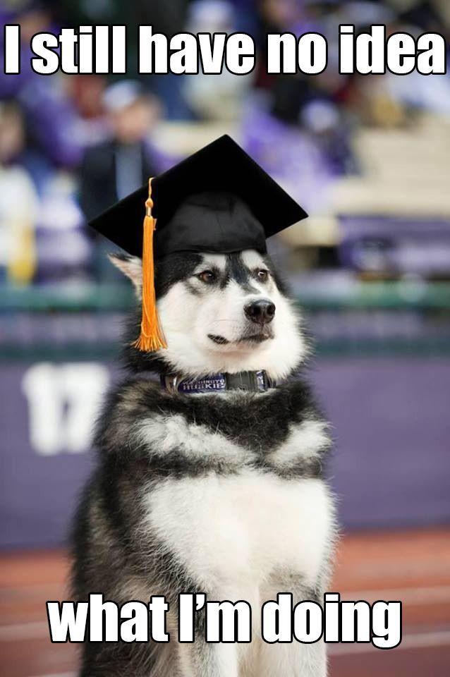 Graduation dog  How I feel right now