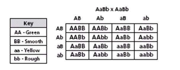 Score Report: Genetics and Punnett Squares Quiz (4) at Free Online Quiz School