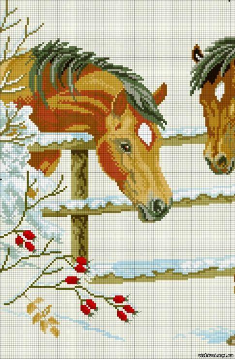 Gallery.ru / Фото #5 - лошади - zhivushaya