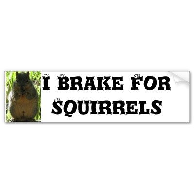 I Brake For Squirrels - Unlike someone I know.  Right Pita??!?!
