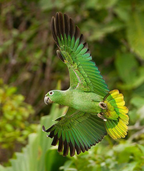 Parrot green...