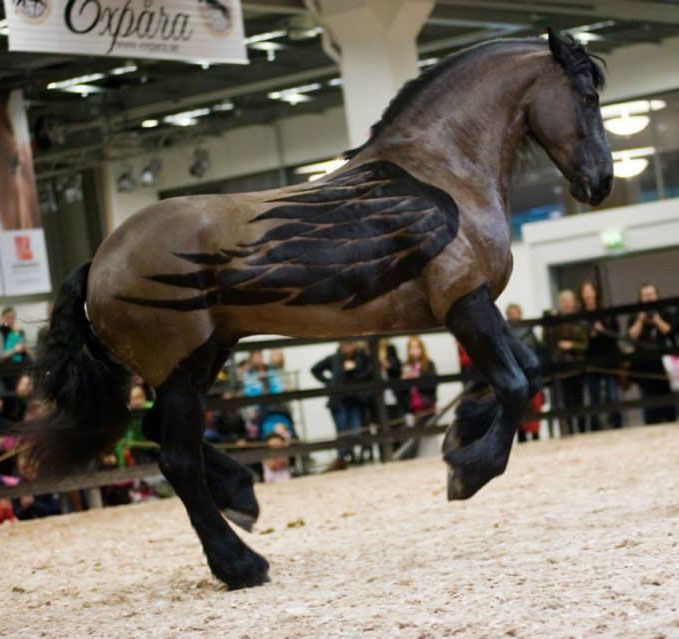 Titkon minden lótulajdonos meg van győződve róla, hogy az ő lova pegazus (kivéve, ha egy