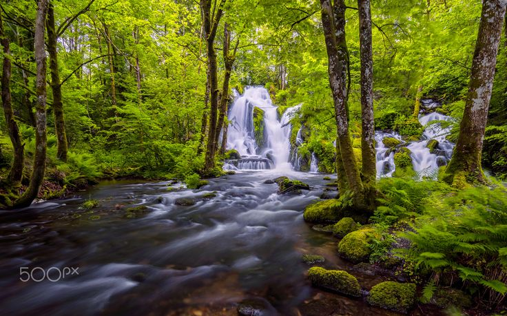 The Forest Waterfall - A waterfall in a beautiful green forest.