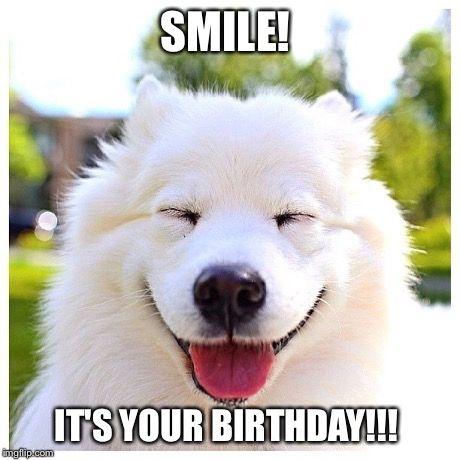 Dog Birthday Meme | Birthday Meme Funny Dog dog happy birthday funny memes ...