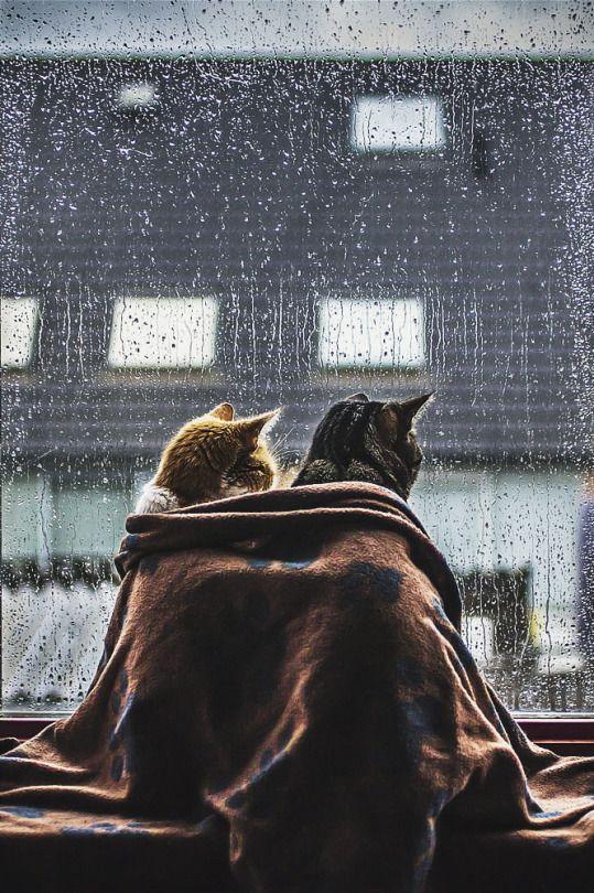 Cold and rainy days (Felicity Berkleef)