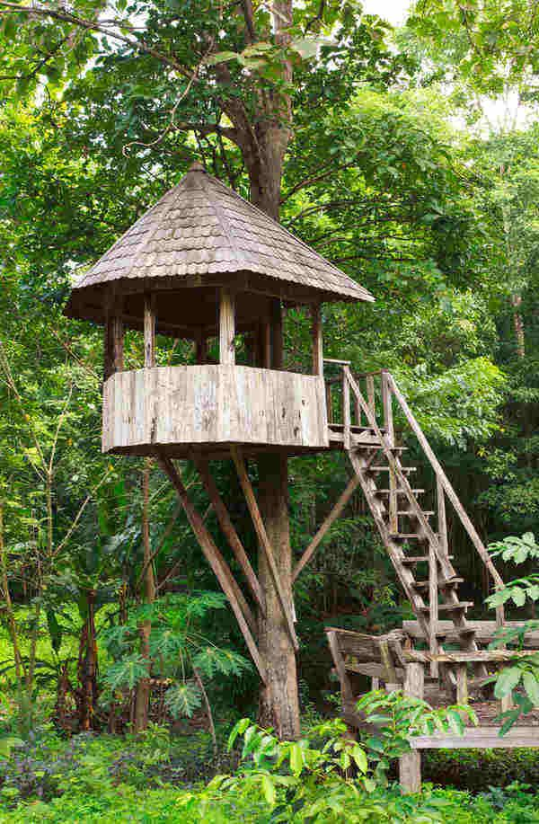 Interesting Kids Tree House Plans Designs Free Inside Inspiration