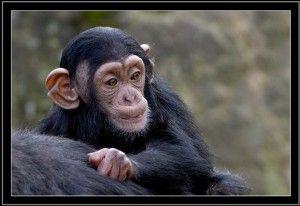 Monkeys - Affen.pps