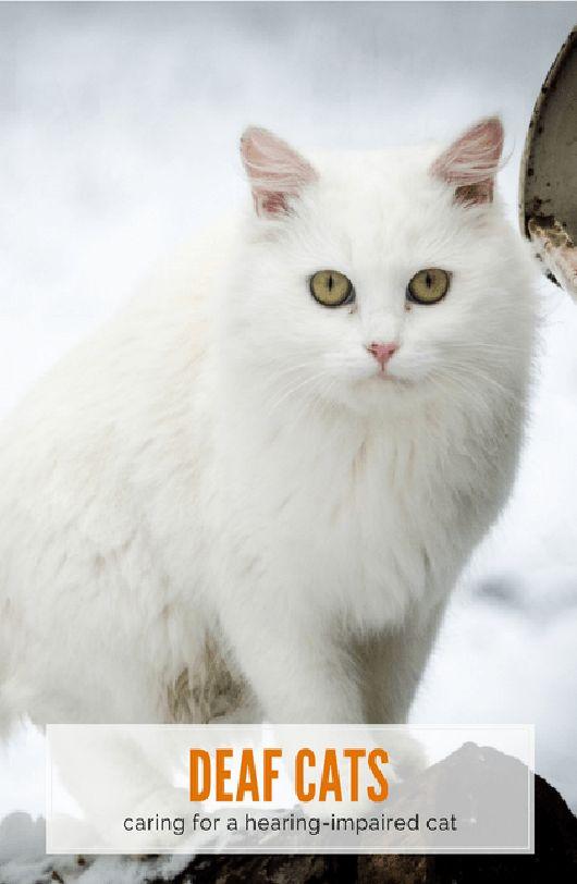 mejores 112 imagenes de cat health en pinterest