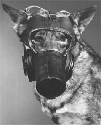 Natural Gas Detection Dog