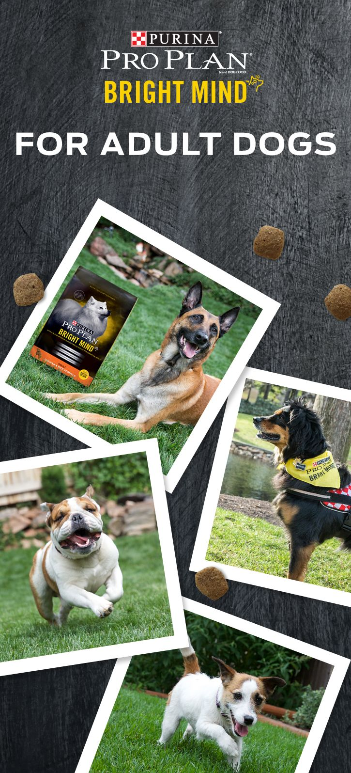 Buy one of our Purina Pro Plan Bright Mind Adult formulas today! Our adult formulas are specially formulated to nourish your dog's mind throughout adulthood. It contains a proprietary blend of nutrients including DHA & EPA, Antioxidants, B Vitamins, and Arginine to support a dog's cognitive health throughout adulthood. And if your dog is seven years or older, there are Bright Mind Adult 7+ formulas which promote mental sharpness and alertness in dogs seven and older.
