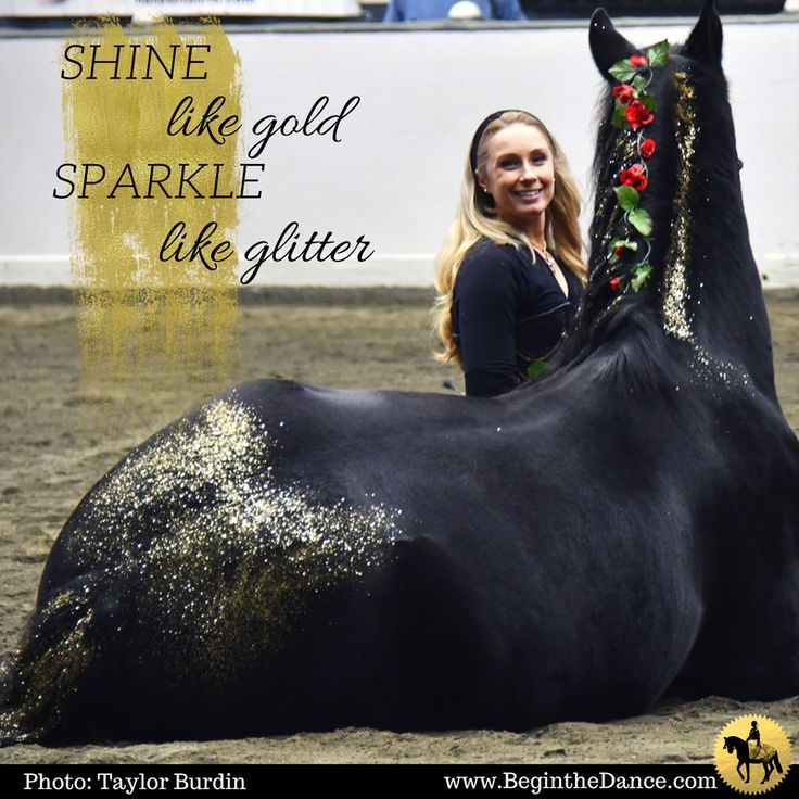 Learn how sandra trains and performs with her horses. click here