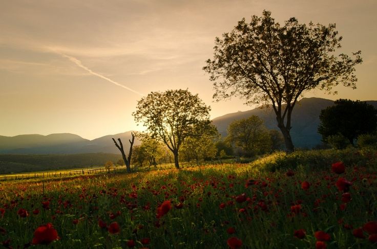 Walking through the red poppies in Abruzzo