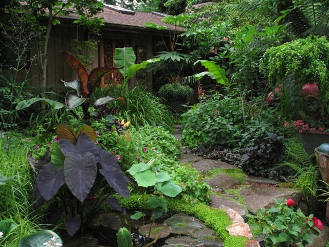 Beautiful tropical garden. Love the various colors and varieties.