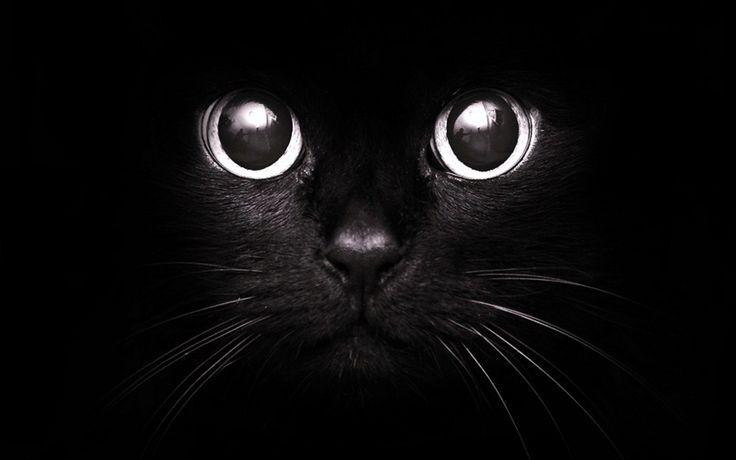 black things | ... amused black cat http wallpaper wallpedia org 20 black cat black htm
