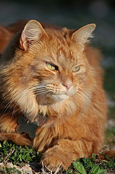 Orange Tabby Cat in the Sun - Looks like Terence from WIP #amwriting