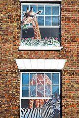 Town Windows Giraffe Knaresborough North Yorkshire England, UK | by © Mark Sunderland www.marksunderland.com