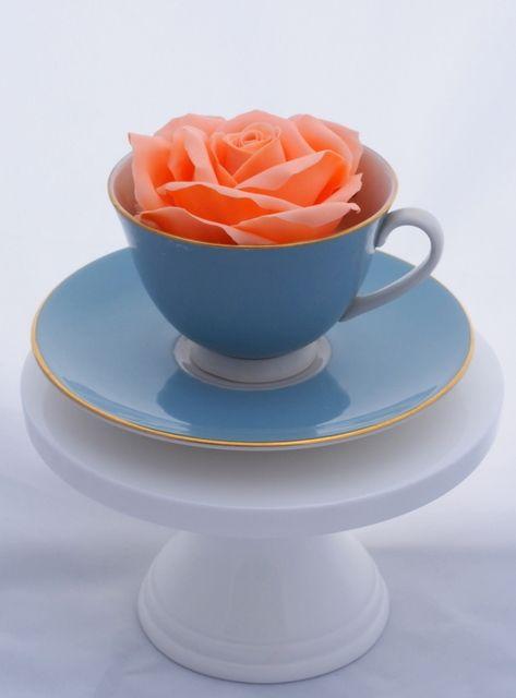 Tea cup rose x