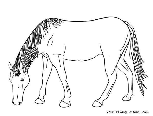 this tutorial will teach you how to draw a horse grazing